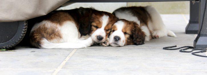 Puppy's Finne en Sam (44)